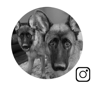 German Shepherd Lifestyle & Training
